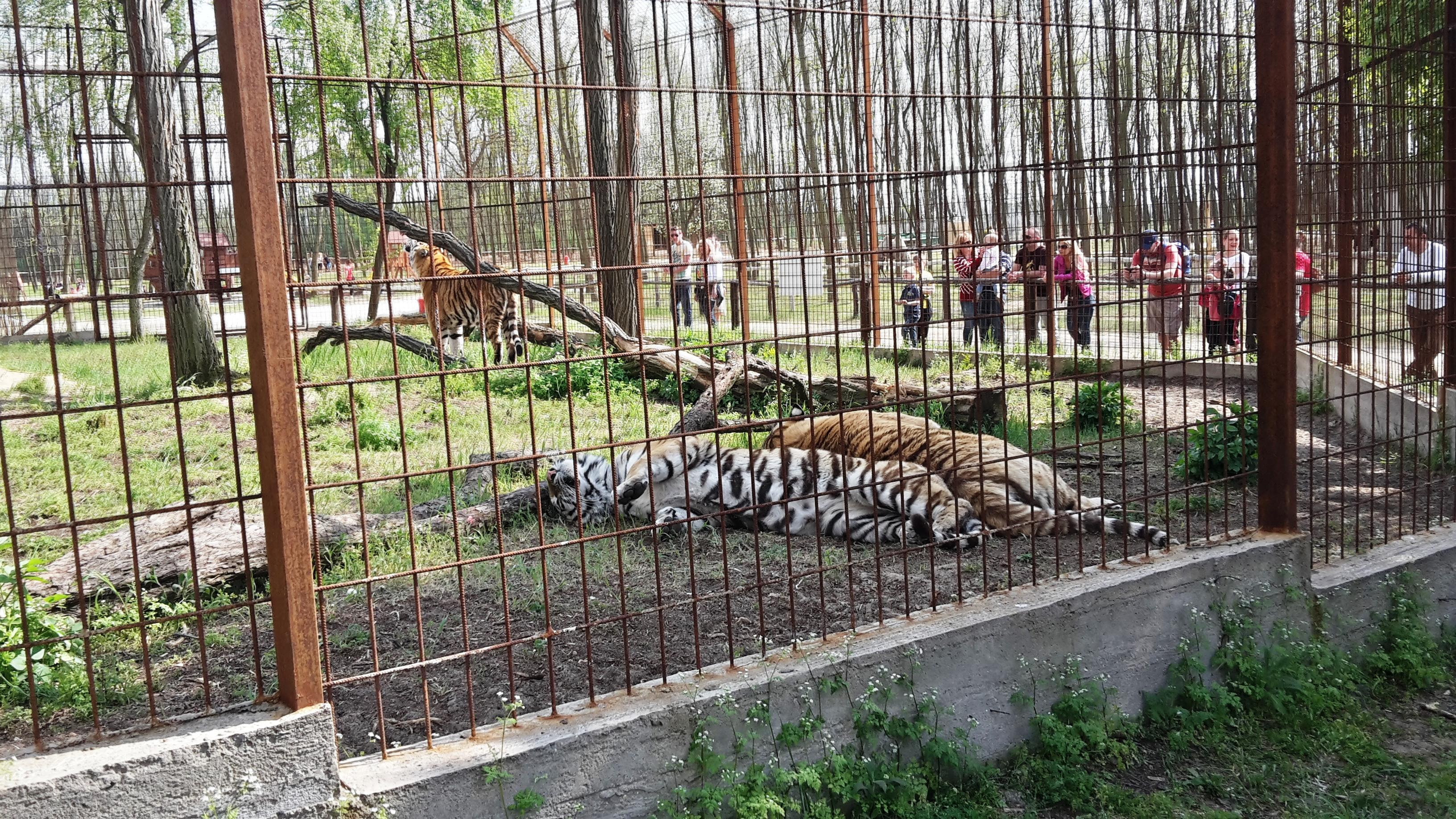 Magán Zoo - Magántulajdonú Állat- és Szabadidőpark Felsőlajos